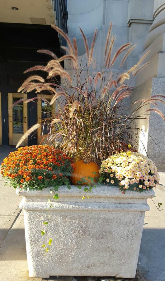 Fall Themed Concrete Planter stock photos