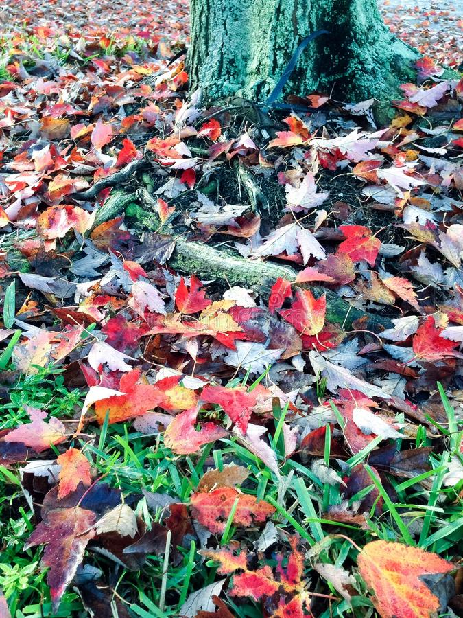 Fall time royalty free stock photography