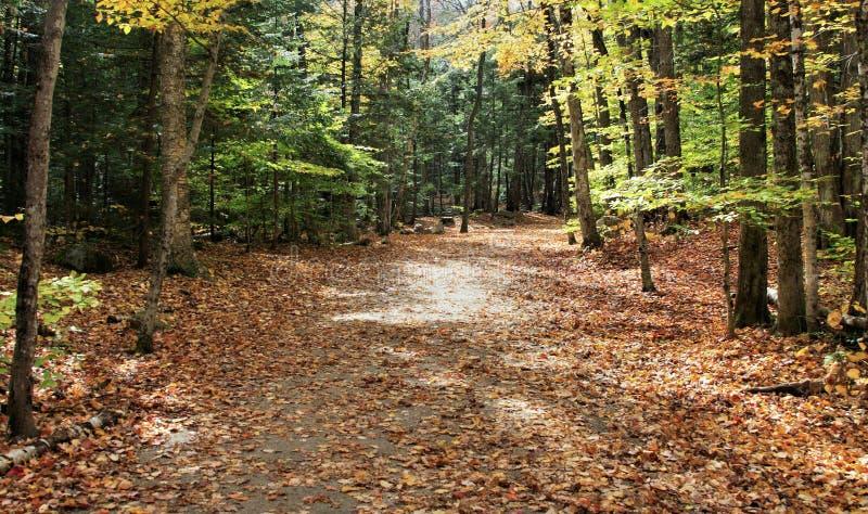 Fall Trail stock photo