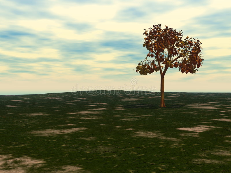 Fall Tree stock image