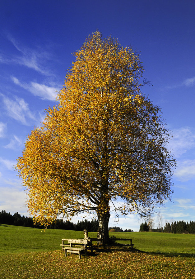 Fall tree and bench stock photography