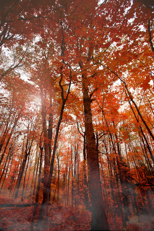 Fall Trees royalty free stock images