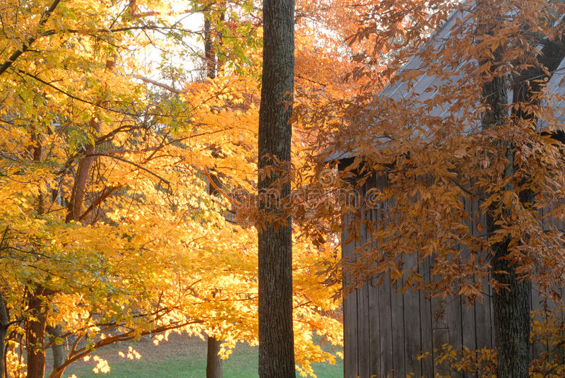 Download Fall Trees In Color Near Rustic Barn Stock Image - Image: 13727091