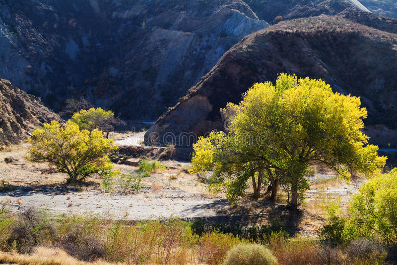 Fall trees by dirt road in mountains stock photography