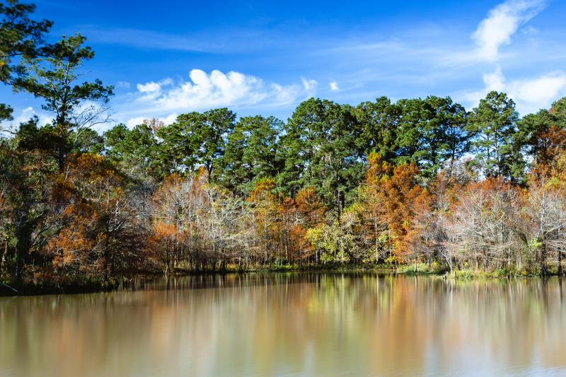 Fall trees on the lake royalty free stock images