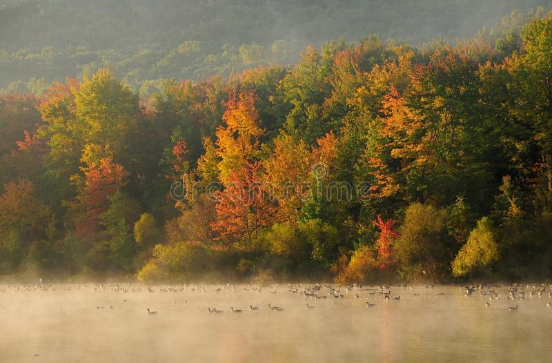 Download Fall Trees A Lake And Geese Stock Photo - Image: 15644452