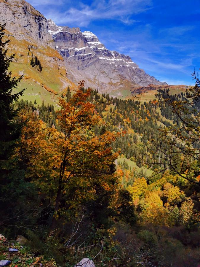 Free Fall Trees On Slopes Of The Glarus Alp Mountains Royalty Free Stock Photos - 163886928