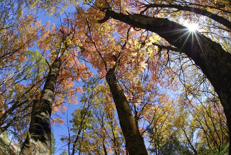 Download Fall Trees and Sunlight stock image. Image of tall, macro - 6384465