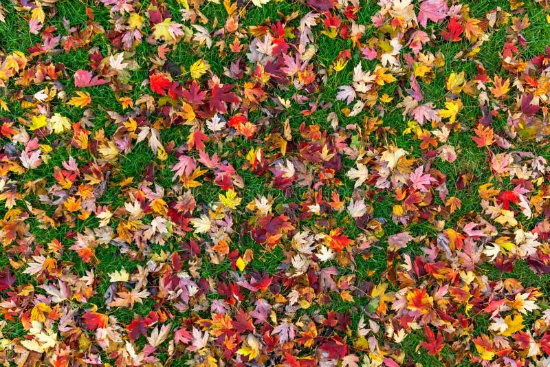 Fall treibt Hintergrund Blätter stockbild