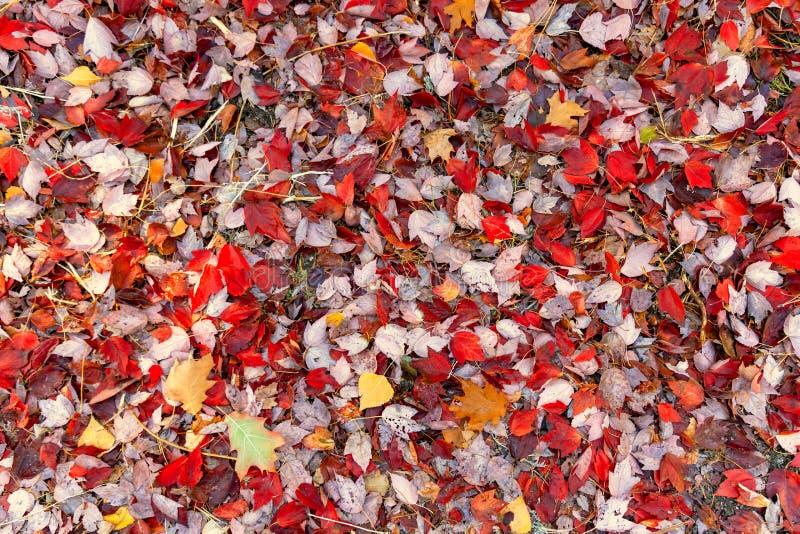 Fall treibt Hintergrund Blätter stockfotografie