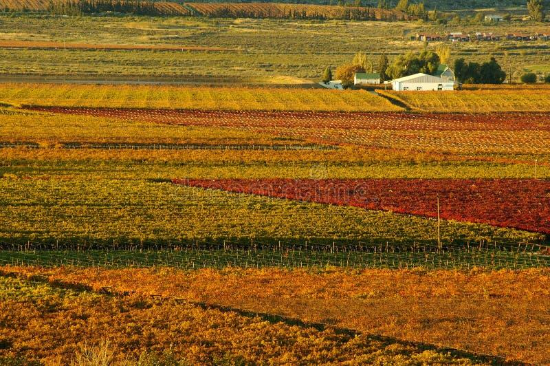 Fall Vineyards20 stockbild