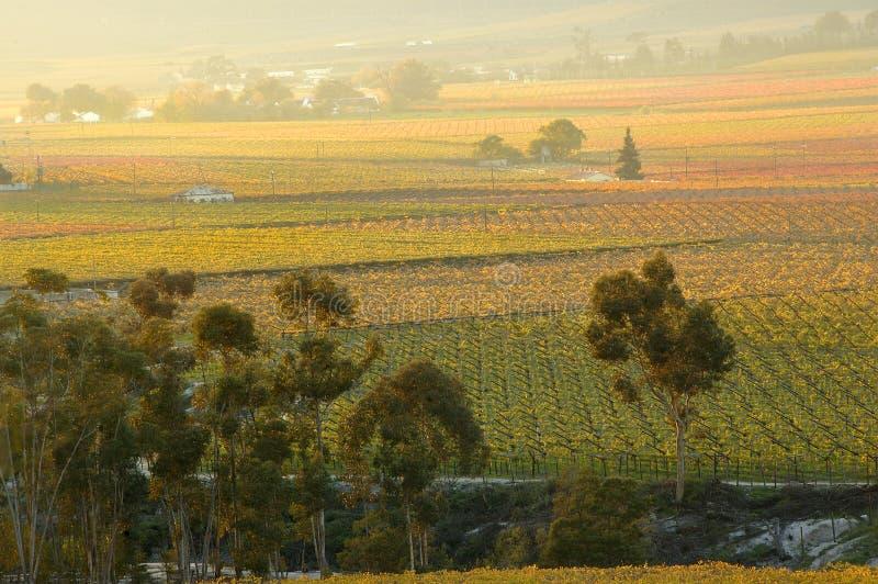 Fall Vineyards27 lizenzfreie stockfotos
