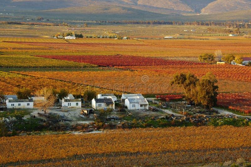 Fall Vineyards30 stockfotos