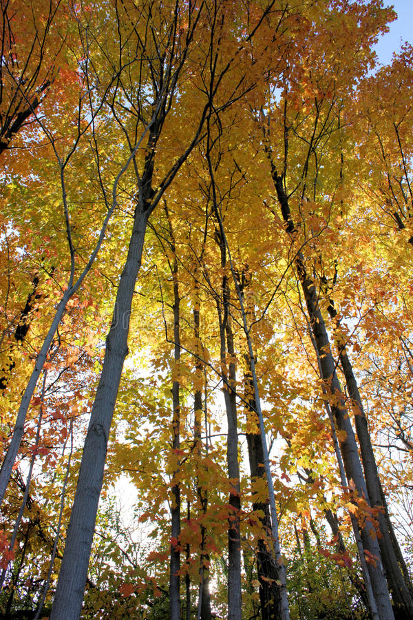 Fall-Wald stockbilder