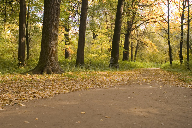 Fall in Wald stockfotografie