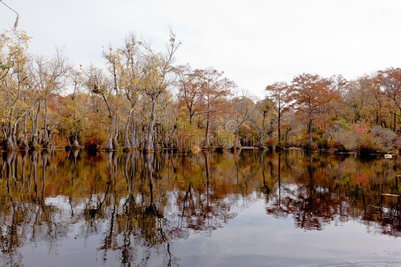 Fall-Waldsumpfgebiet Kaufleute Millpon NC SP USA lizenzfreie stockbilder