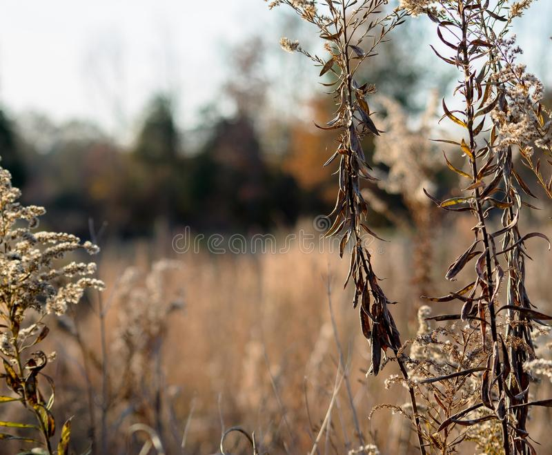 Fall winter landscape withered growth royalty free stock photography
