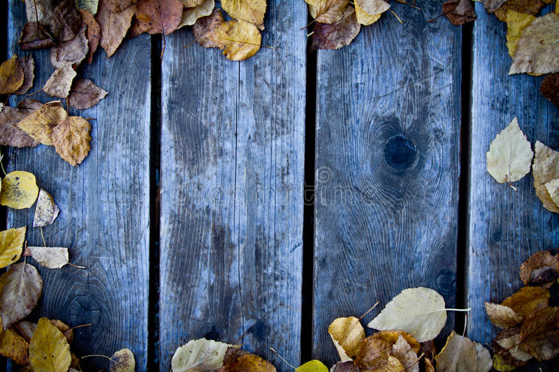 Fall wood background stock photo