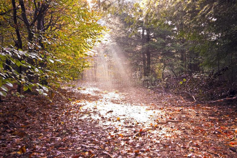 Fall in the woods in the countryside from the Neth stock image