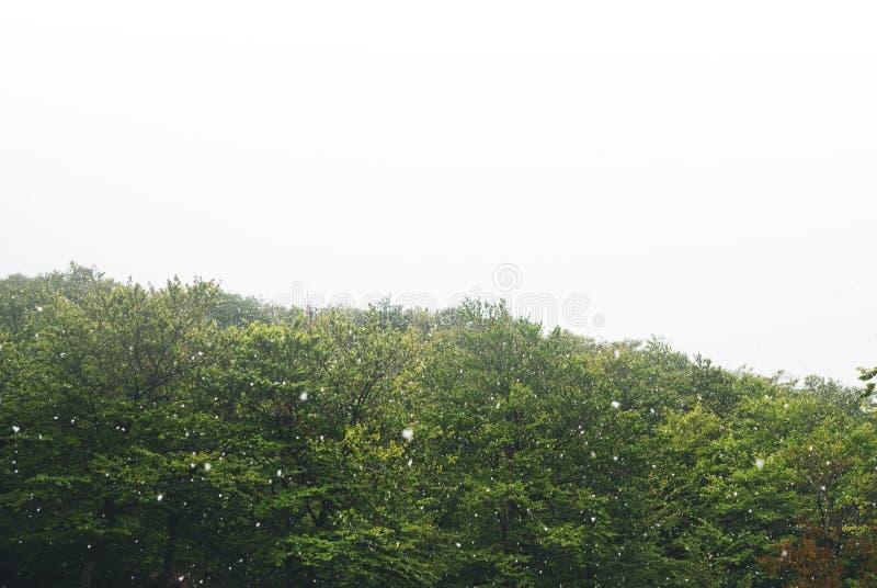 falla som är insnöat bergen, väg i skogen med snöflingor, vinternatur, feriehelg i naturen, grönt träd arkivfoto