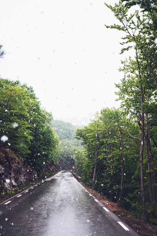 falla som är insnöat bergen, väg i skogen med snöflingor, vinternatur, feriehelg i naturen, grönt träd arkivbild