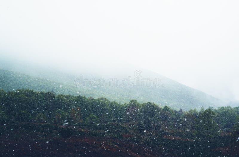 falla som är insnöat bergen, väg i skogen med snöflingor, vinternatur, feriehelg i naturen, grönt träd med whit arkivfoton