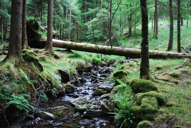 fallan tree arkivfoto