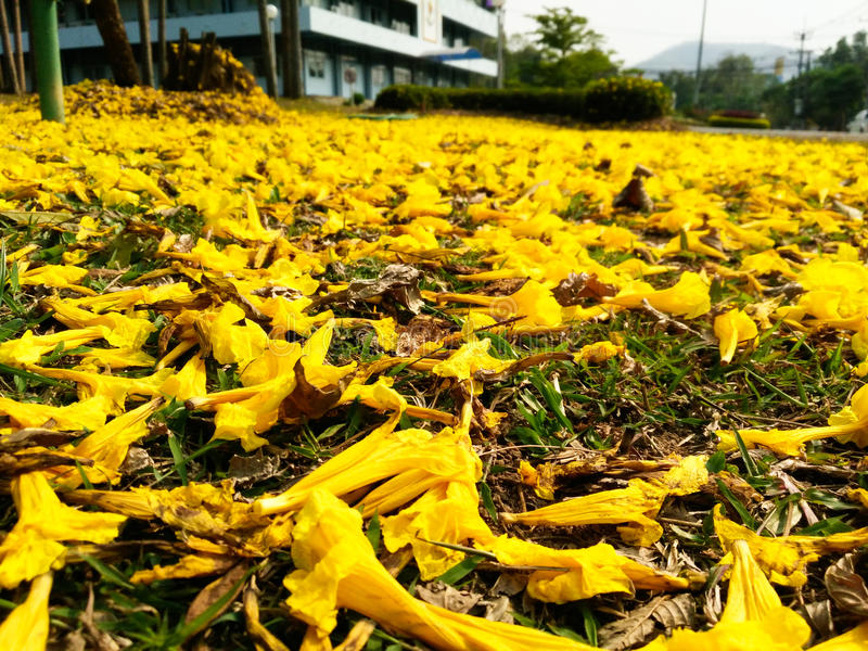 fallande blommayellow arkivbild