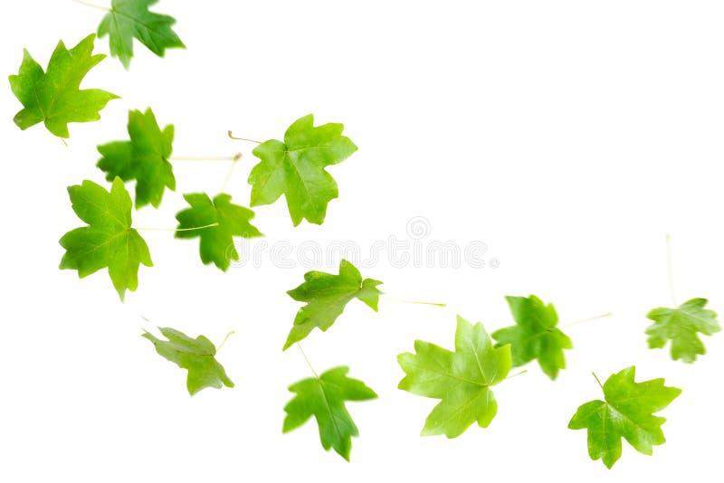 fallande greenleaves royaltyfri bild