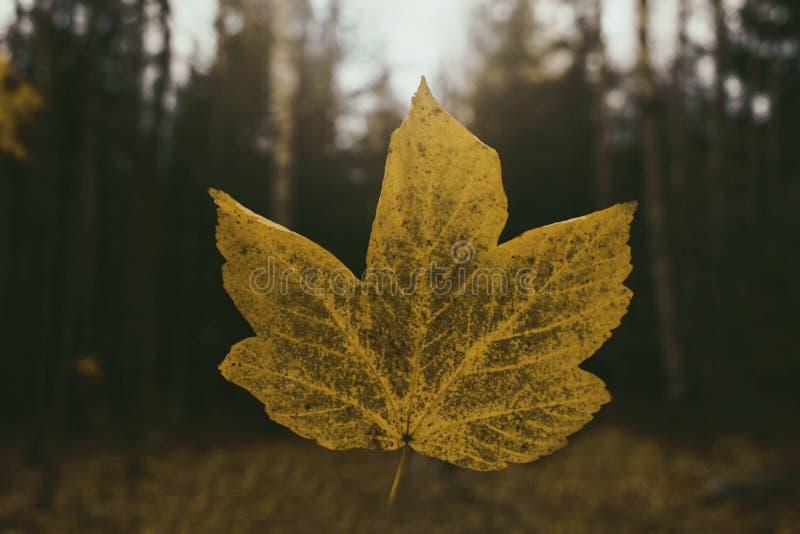 fallande leaf royaltyfri fotografi