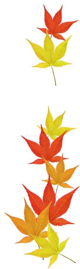 fallande leaves royaltyfri foto