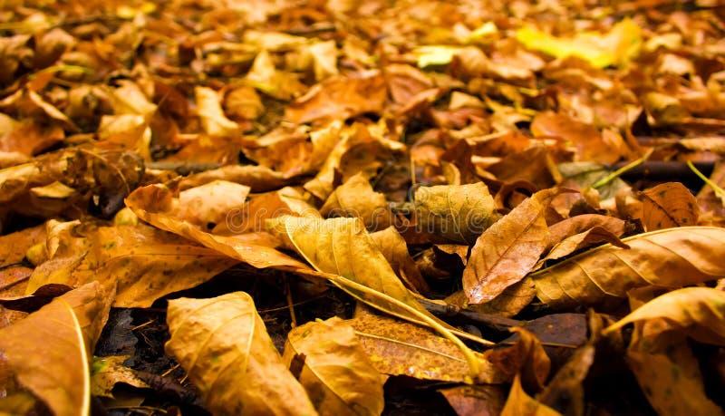 fallande leavestextur fotografering för bildbyråer