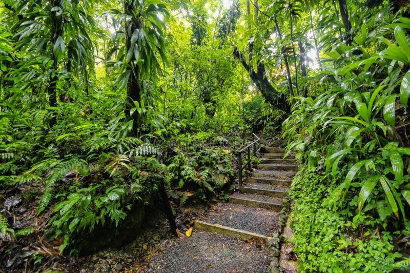 Fallande lianer, Dominica arkivfoto