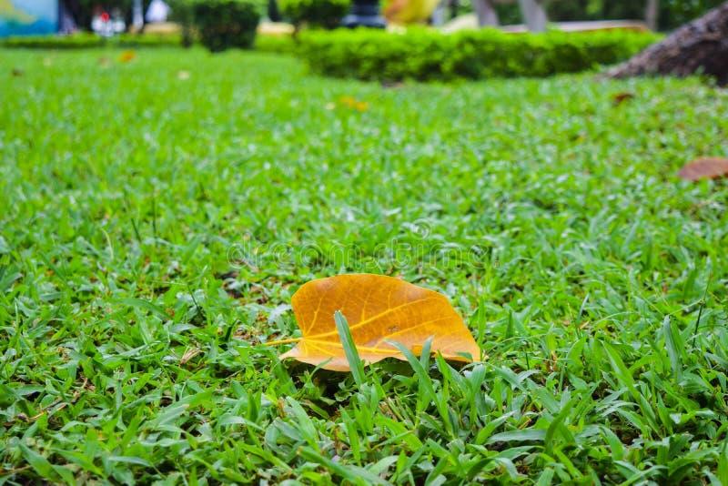 Fallande säsong i mummel Noi, Vietnam royaltyfria foton
