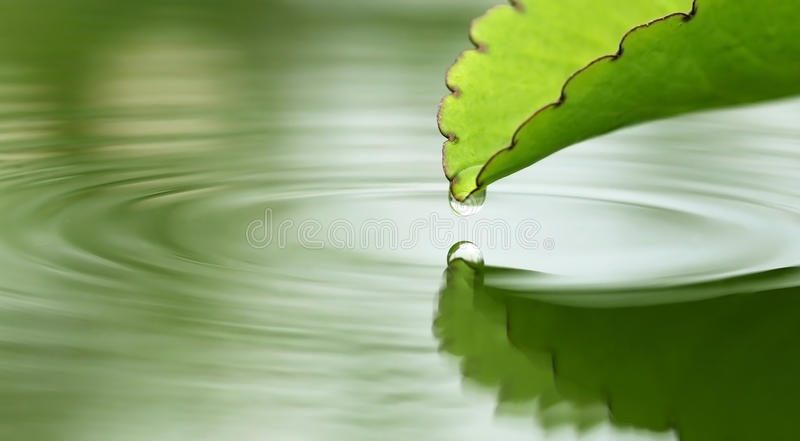Fallande små droppar från växt- Kalanchoe sidor arkivfoton