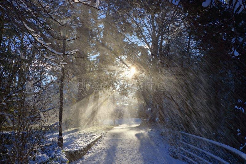 Fallande snö och den stigande vintersolen på klyftavattenvägen parkerar, Victoria, B C fotografering för bildbyråer