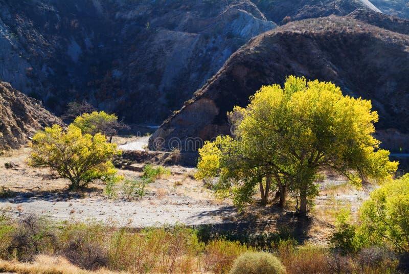 Fallbäume durch Schotterweg in den Bergen stockfotografie