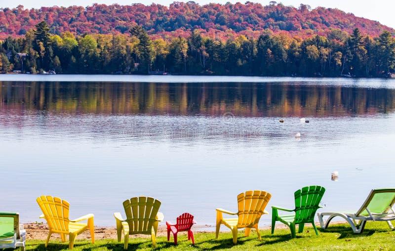 Fallbäume mit See stockbild