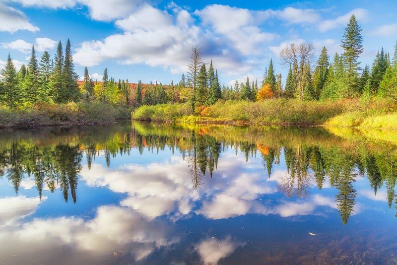 Fallbäume mit See lizenzfreie stockfotos