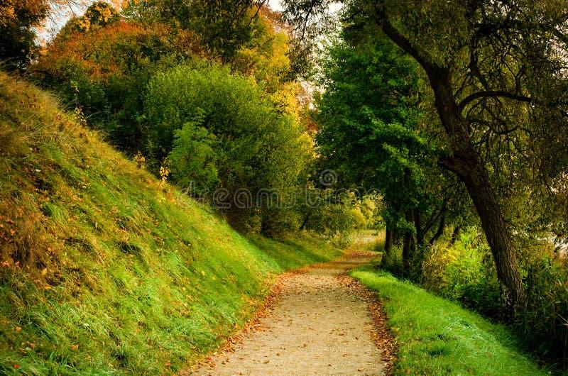 Fallbana i skog fotografering för bildbyråer