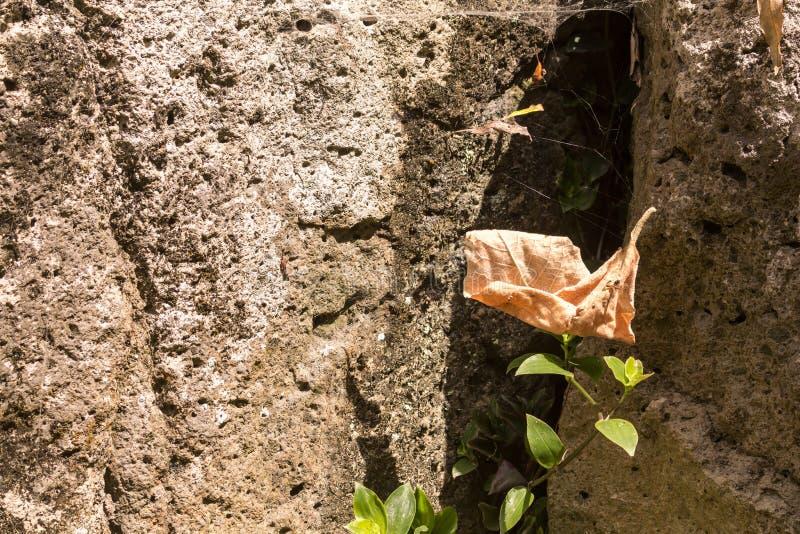 Fallblatt in einem Spinnennetz hinter einem Felsen lizenzfreies stockbild