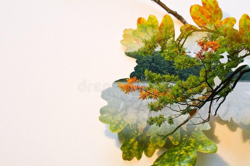 Falldoppelbelichtung in den bunten Blättern und Baumstamm und -teich lizenzfreie abbildung