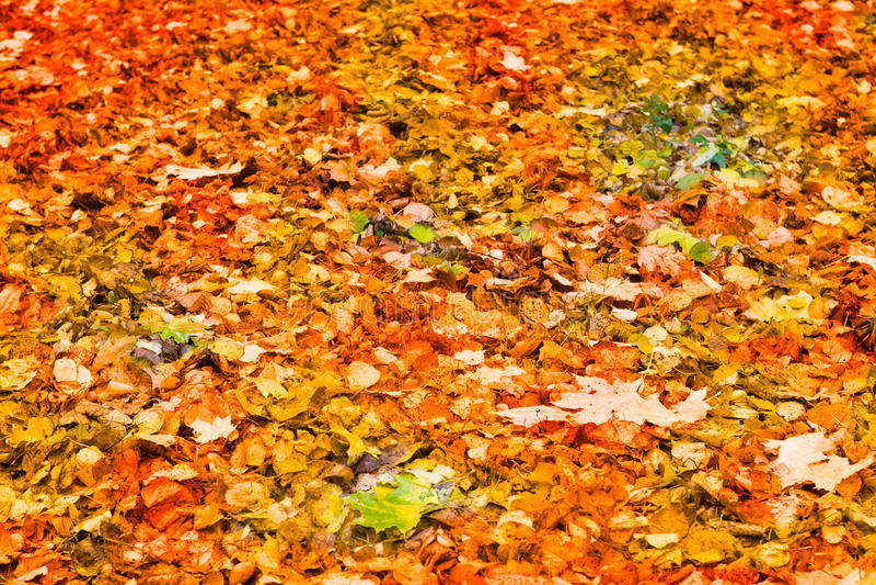 falled zielona ziemia opuszczać czerwonego kolor żółty zdjęcie royalty free