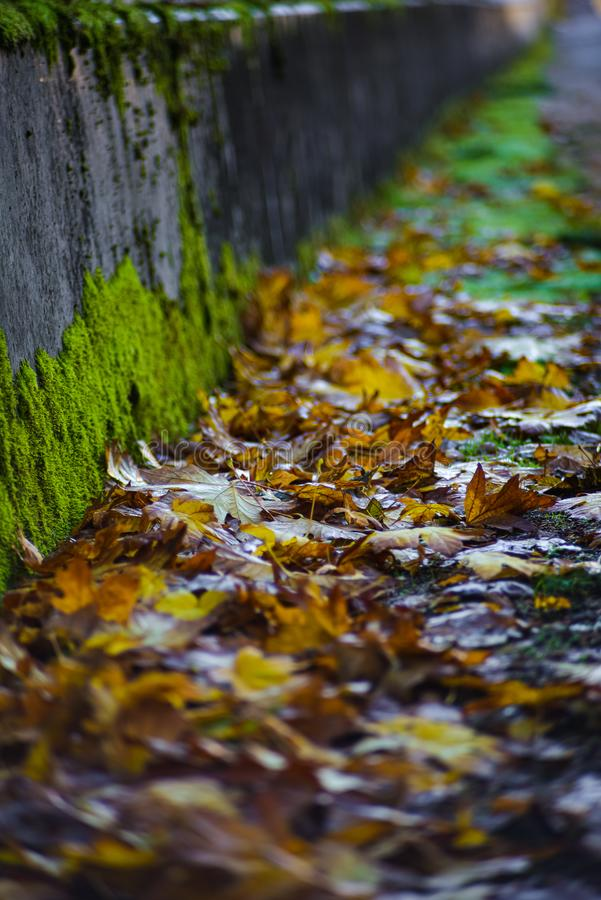 Golden Brown Autumn Leaf On The Ground By a Green Moss Bridge, A Pacific Northwest Fall Season Scenery, Washington, United States. Fallen autumn leaf accumulated royalty free stock photography