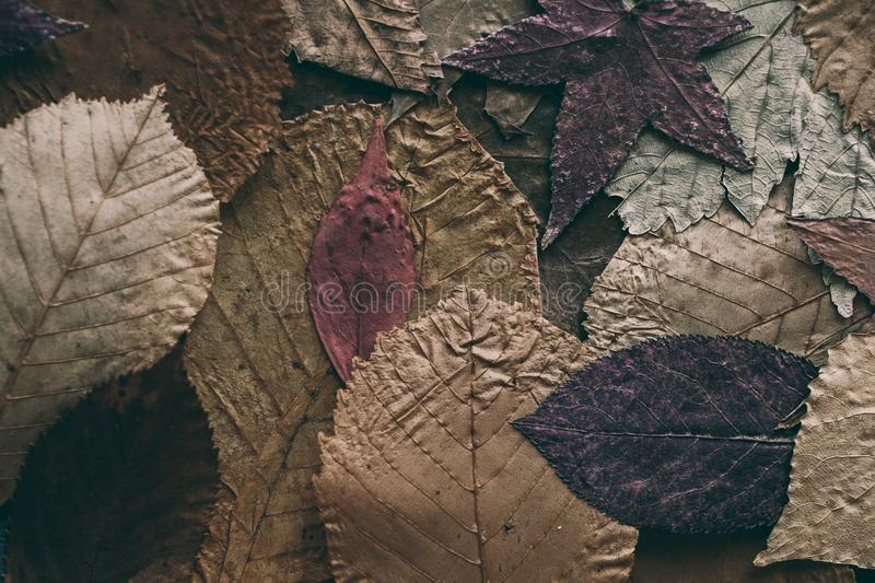 Fallen autumn leaves background. Colorful leaves background and texture for design. Close up view of autumn leaves as background. royalty free stock images