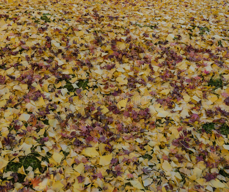 Fallen autumn leaves on ground royalty free stock image