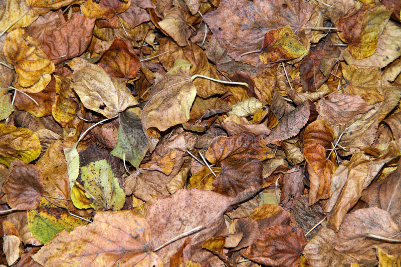 Fallen autumn leaves. Fallen leaves a nuisance and danger on roads stock image