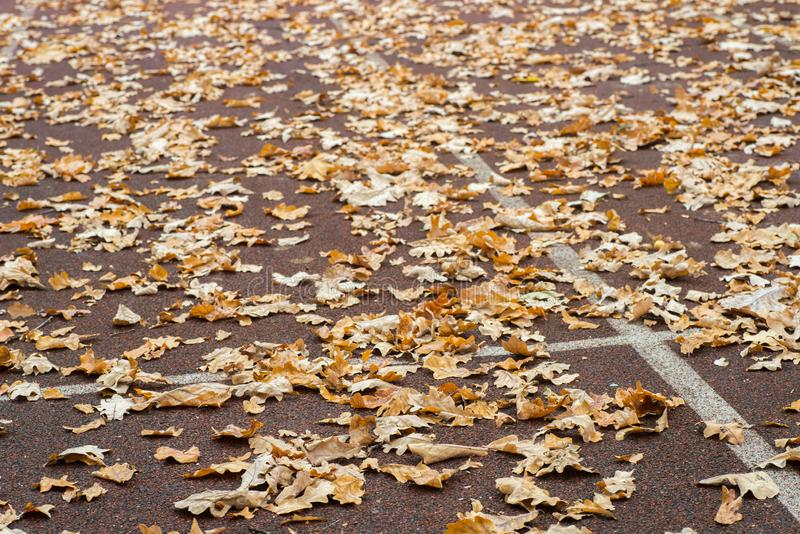 Fallen autumn leaves on running track royalty free stock photos