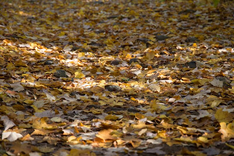 Fallen autumn leaves royalty free stock images