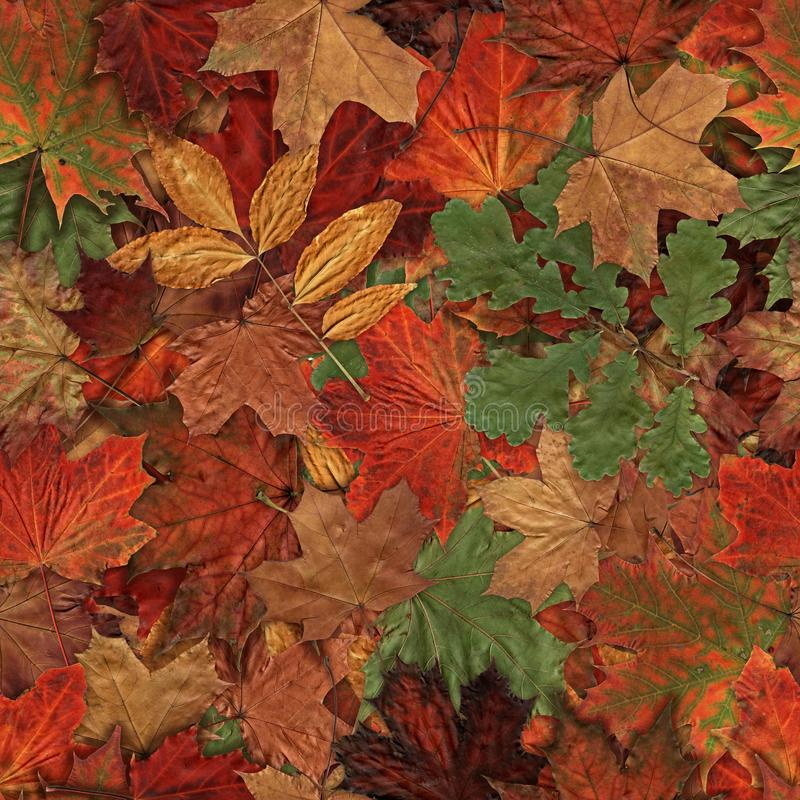 Fallen autumn leaves seamless pattern Yellow Red and Green Autumn Leaves Background.2 stock photo